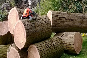 A link to Tree Surgeon Services.