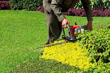 Professional Hedge trimming from Landscape Zoolutions.