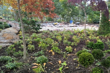 Shrubs beautifully manicured by Landscape Zoolutions.